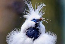 BIRDS / by Arlene Kerig