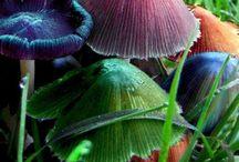 Mushrooms & Fungi / by Princess Wiltedflower