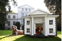 for the DOGS / by Harlow in the Hamptons