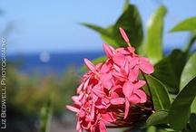 St. Lucia / by Karen Klingenberg