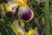 Plantas y flores ,increibles / by belen fernandez alonso