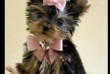 Our future fur baby! / by Tiffany McEntyre