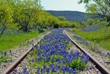 Railway Tracks & Stock Cars / by Pieter Smith