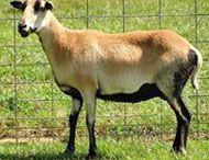 Goats / by Wayfaring Stranger