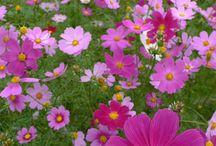jardines y flores / by Ye Rodriguez