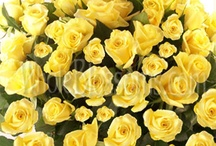 10 Flowers to give to your date / by JumpDates - 100% free dating site