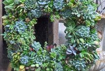 Gardening / by Christine Hoar