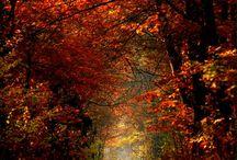 Autumn Grace / by Heidi Ibarra