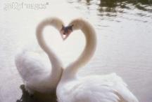 Love / by Nati J