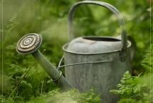 Watering Cans  / by Brenda Baker