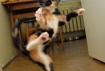 Crazy for Cats / by Patty Nowell-Odom