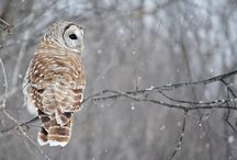 All about  Owls / by Michelle Marshall