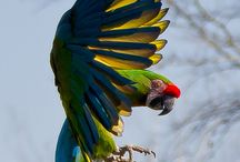 Parrots / by Crystal Catron