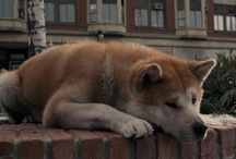 Hachiko A Dog's Story / by GREAT MUSICAL'S