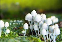 Color / by Charlene Hansen