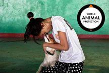 World Animal Protection / by World Animal Protection Australia