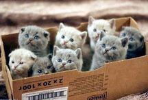 kittens/ gatito / monos gatitos/ lovely kittens / by Vestidodenovia Ven