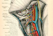 Medical-Nursing-Health-Science! / by Donna McDaniel Francis
