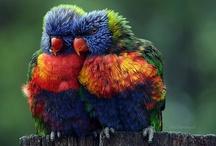 Birds! / by Sandy Hall