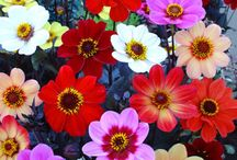 Favorite Flowers / by Carole van Wulven
