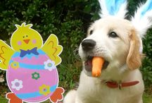 Easter / by Earl Netwal