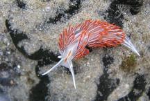 Marine Biology Lovelies / by Carissa Taylor