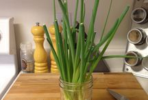 Green onion stems / by Marti Thompson