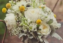 Flowers  / by Amanda Dennin