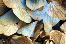 COLOUR  -  Brown & Blue / by Deborah