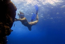 Madeira diving / by Nature Meetings