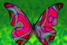Butterflies / by Janice Magee Walz
