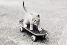 for cuteness sake / by Samantha Bamsey