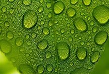 Green / by J. Schuh