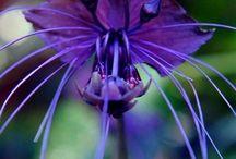 flowers / by janice sandak