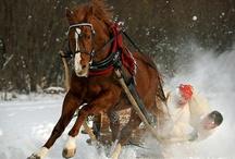 Horsey's / by Sandra Fortner