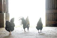 Farm / by Tammy Donroe