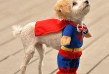 Animal Cuties / by Beth Jessee Burgess