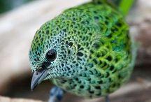 Beautiful Birds / by Sarah Hornik