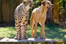 Best Friend / by PrideRock Wildlife Refuge