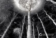 By the Light of the Moon / by Carol Crady