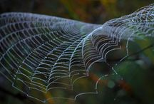 Weaving the Web / by Mary P Brown