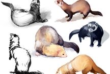 Reference - animals / by Ian W