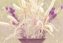 Bouquets & Floral Inspirations / by WeddingDresses.com