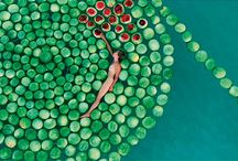 Watermelon / by Moogieh
