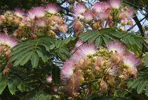 Florals~Trees / by Teresa Noah-Brown