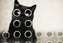 Cats / by Ashlyn Laws