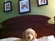 home ideas / by Charlotte Peterson