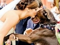 Wedding-Photos / by Kassiopea