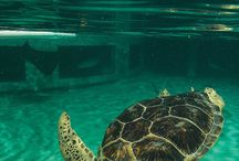 Turtle Town / In honor of World Turtle Day, we're showcasing all our awesome turtle friends!  / by National Aquarium