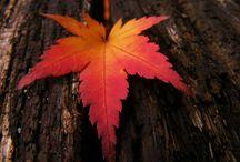 Leaves / by Annie Eckblad